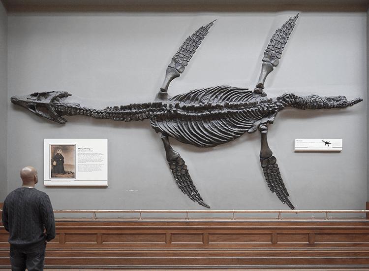 Rhomaleosaurus bei Google live erleben