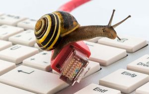 Schnecke auf LAN-Kabel