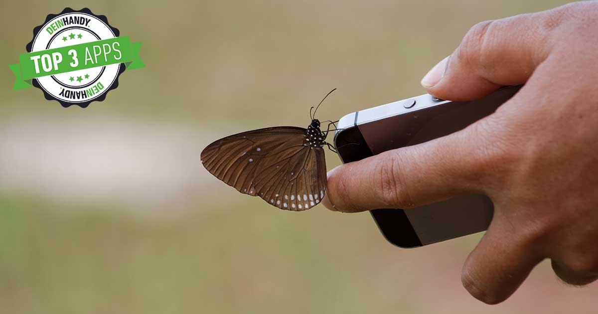 Insekten bestimmen