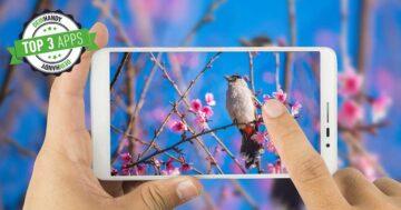 Vögel bestimmen: Die 3 besten kostenlosen Vogel-Apps im Test