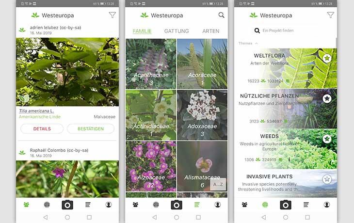 Pflanzen bestimmen