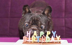 WhatsApp-Geburtstagsgrüße: Hund mit Happy-Birthday-Kuchen