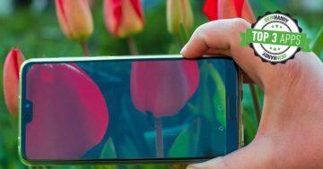 Blumen bestimmen: Die 3 besten kostenlosen Blumen-Apps im Test