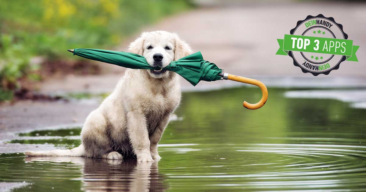 Regenradar-App: Hund mit Regenschirm