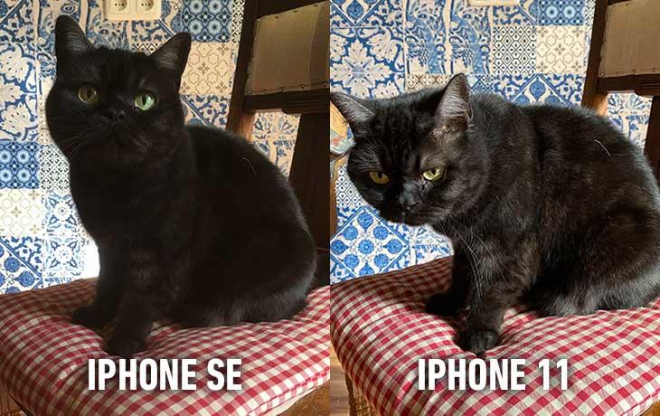 iPhone 11 vs. iPhone SE: Vergleichsbild Katze