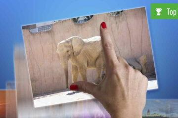 bilder-verkleinern-app