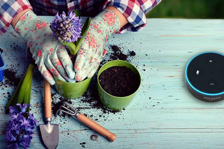 Blumen werden in einen Topf eingepflanzt.