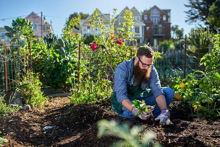 Mann bepflanzt den Garten.