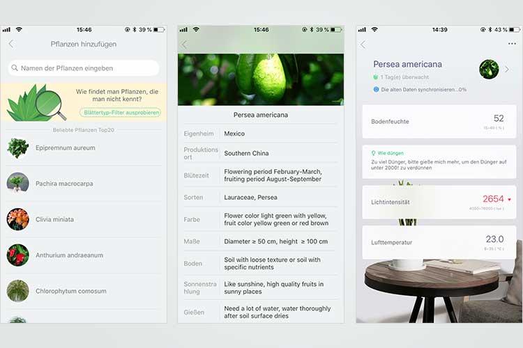 Die App sucht zunächst über Bluetooth den Sensor, anschließend kann die Pflanze ausgewählt werden.