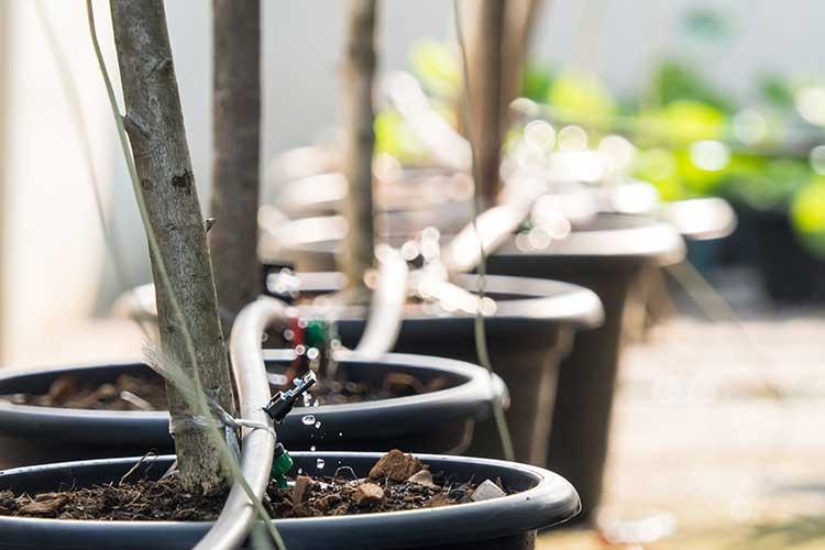 Urlaubsbewässerung: über mehrere Topfpflanzen führt ein Schlauch, aus dem ein bisschen Wasser tröpfelt