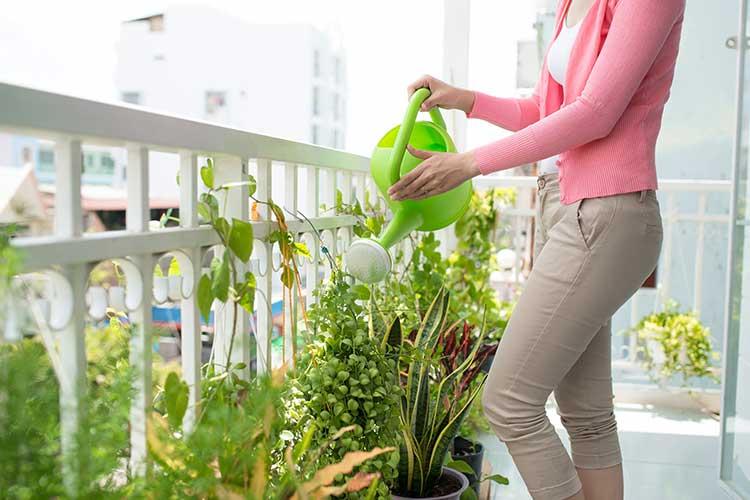 Urlaubsbewässerung: Frau gießt Pflanzen mit Gießkanne auf Balkon