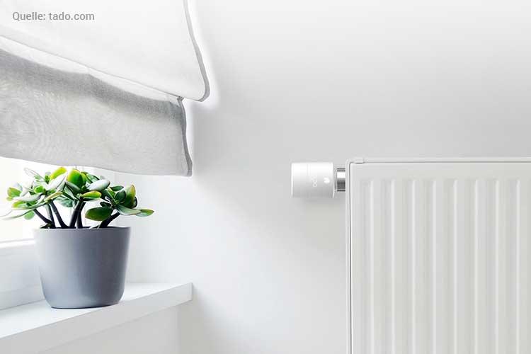 Tado Heizkörperthermostat installieren: Heizung mit Thermostat daneben eine Pfanze